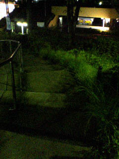 Bush_and_Staircase_050824_001501