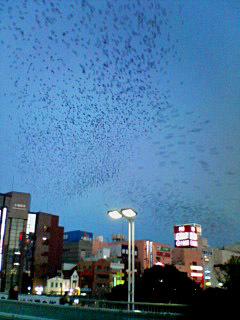 Mukudori_051119_164501_1