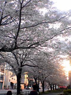 Senkawa-dori_Ranman_050409_173702