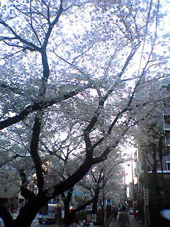 Senkawa-dori_Ranman_050409_175501