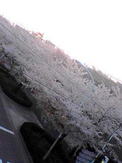 Senkawa-dori_Ranman_050409_175803