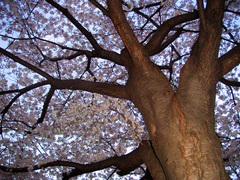 Senkawa-dori_Ranman_PICT0667