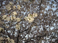 Senkawa-dori_Ranman_PICT0672