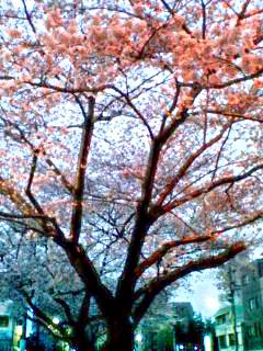 Senkawa_Tsutsumi_060326_180602