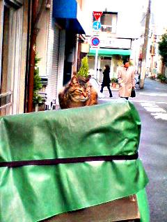 Cat_070118_084001_0001