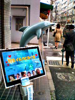 Dolphin_070423_081602_0001