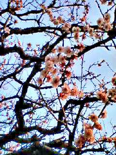 Nakamurakita_4123_070304_163502_0001