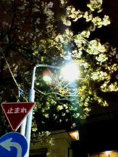 Yozakura_070411_201501_0001